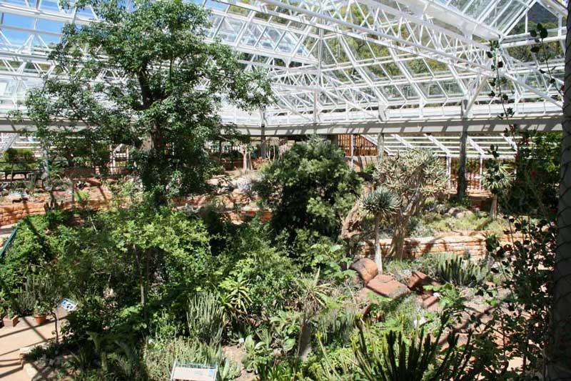 Boomslang Kirstenbosch