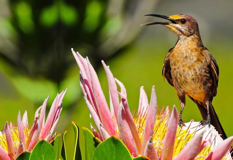 Blog - sunbird