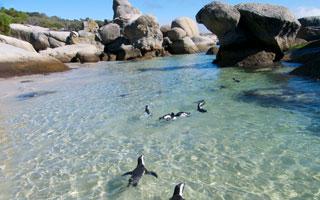 Kapstadt + Penguine
