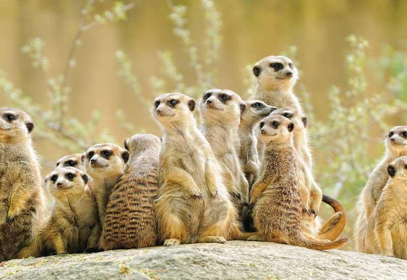 wunderbare Tierwelt im Kruger National Park