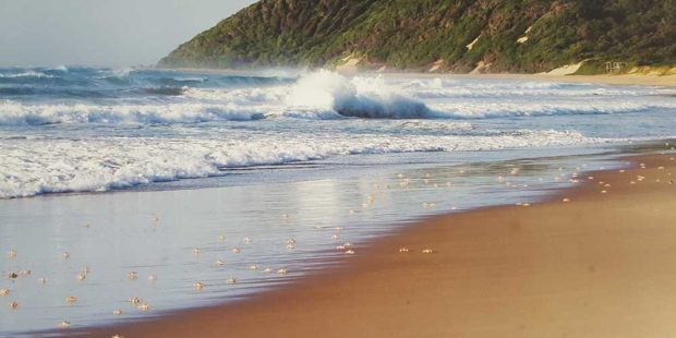 Bush & Beach Winter Warmer